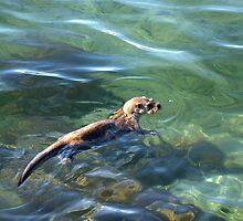 The Shetland Otter by Gary Buchan