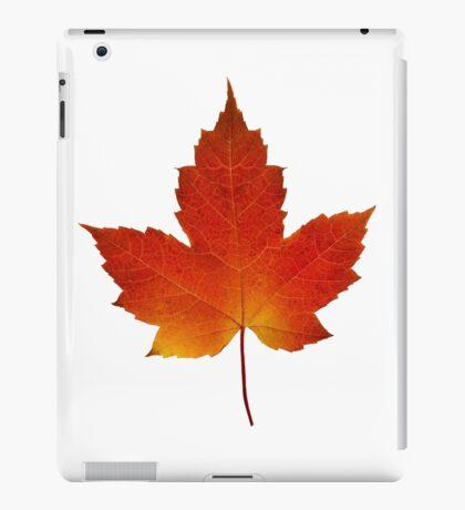 Maple Leaf - Algonquin Park, Canada iPad Case/Skin
