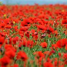 Poppies for a weary mind by Photography  by Mathilde
