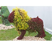 A Lion made of flowers  Photographic Print