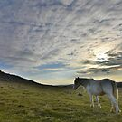 Cornwall: Lone Pony by Rob Parsons