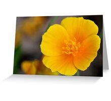 California Poppy in Texas Greeting Card