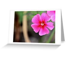Pink Flower - Need ID Greeting Card