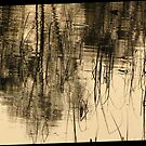 Reflections On A Pond by ArtOfE