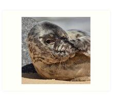 Peek-A-Boo Seal Art Print