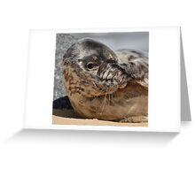 Peek-A-Boo Seal Greeting Card