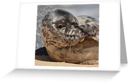 Peek-A-Boo Seal by Patricia Jacobs DPAGB LRPS BPE4
