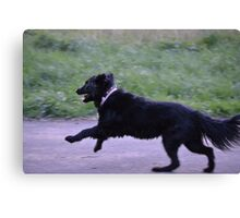 Black Lab Flyer Canvas Print