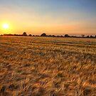 Summer Sunset, Essex. by Mat Robinson