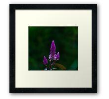 Purple spike Framed Print