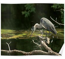 Great Blue Heron - Ottawa Poster