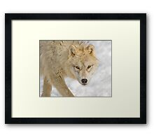 Cold Stare Framed Print