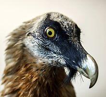 Stuffed wild bird head in museum of nature by Alexander Sorokopud