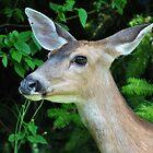Deer by JennaKnight