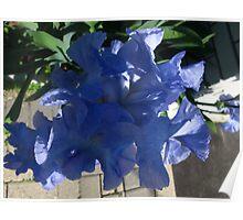 Iris pirouette Poster