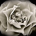 Black & White Camellia by JennaKnight