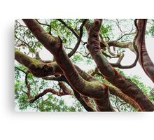 ~ entangled ~ Canvas Print