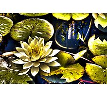 Surreal Lilly Photographic Print