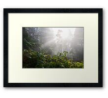 Forest with fog Framed Print