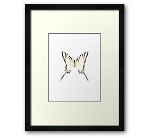 Papilio protesilaus Framed Print