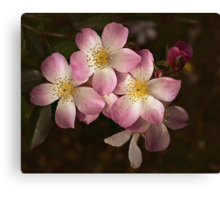 Lyda Rose, oh won't you be mine? Canvas Print