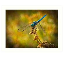 The Blue Dragonfly Art Print