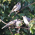 Bird-Family by photoj