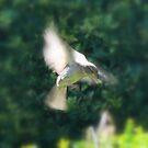 Bird by photoj