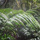 Rainforest by MiloAddict