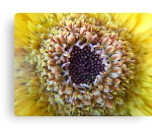 Macro Yellow Flower Center Canvas Print