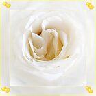 Snow-white Rose by Art-Motiva