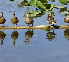 All My Ducks In A Row by Tracy Faught