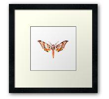 Ambulyx dohertyi Framed Print