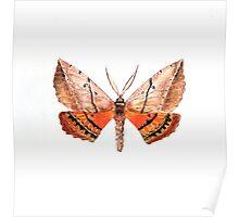 Chelepteryx chalepteryx Poster