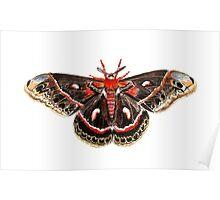 Robin Moth Poster