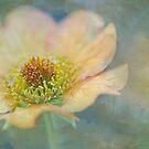 summer splendour by Teresa Pople