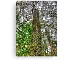 Looking Up - Mount Wilson NSW Australia - The HDR Experience Canvas Print
