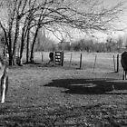 Horses by Gabriel Skoropada