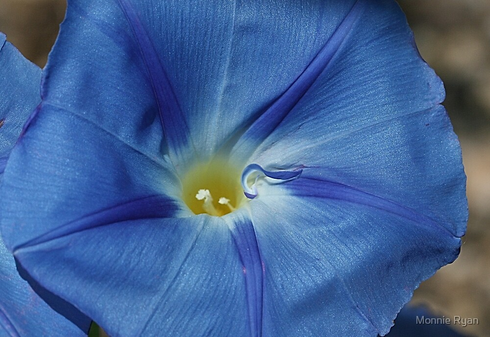 Good Morning, Glory! by Monnie Ryan