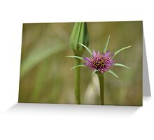Dandelion in bloom Greeting Card