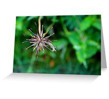 Star Flower Greeting Card