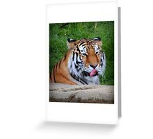 Tiger Ponders His Next Snack Greeting Card