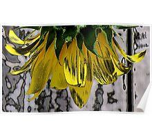 Polished Sunflower Poster