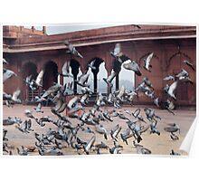Flight of pigeons inside the Jama Masjid in Delhi Poster
