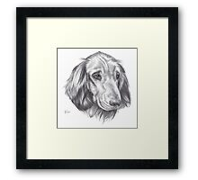 Arthur (Animal Charity) Framed Print