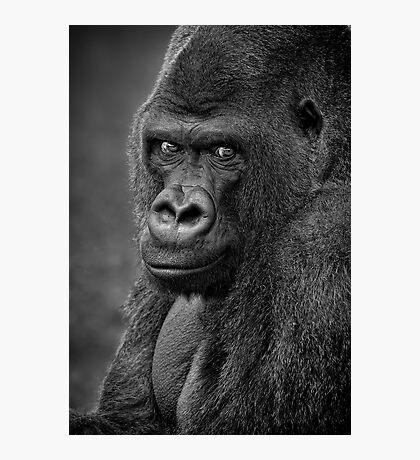 Lowland Gorilla Photographic Print