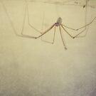 spider by Marko Beslac