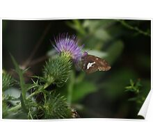 Butterfly Feeding Poster