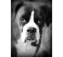 Arwen's Portrait - Female Boxer Photographic Print