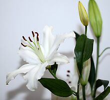 White Lilies with Buds by Carole-Anne
